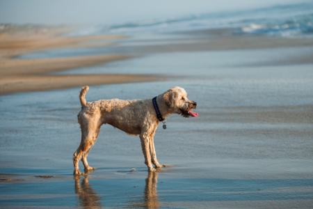 Outer Banks Pet friendly rentals