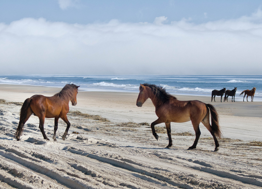 Outer Banks Wild Horses | Tips For Driving on the Beach